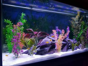Fish aquarium and malawi fish lt rena posot class for Setting up a fish tank