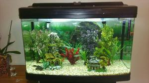 120 litre bow front fish tank with stand posot class for Bow front fish tank