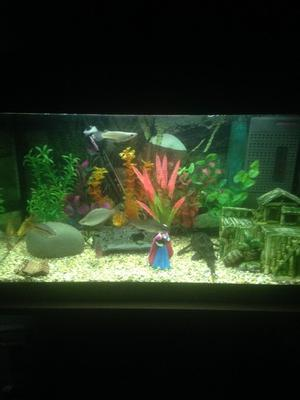 3 ft fish tank with stand n full set up posot class for Fish tank set