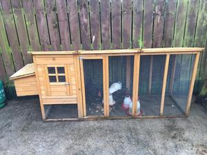 Hens and coop