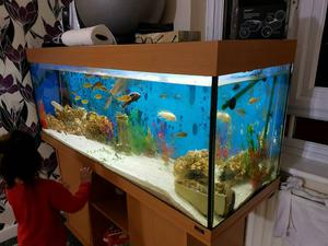 5ft fish tank 2 filters and fishes and all accessories