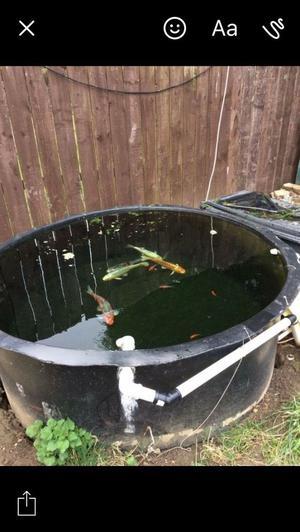 Koi pond filter posot class for Fish pond setup