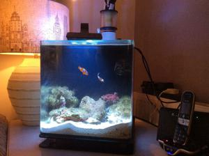 Aqua reef 275 cube marine tank in aberdare posot class for Micro fish tank