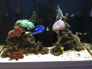 Mature saltwater aquarium