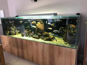 3 ft fish tank with stand n full set up posot class for Fish tank set up