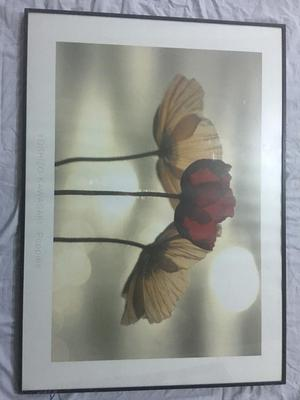 Large Ikea Flowers Floral Wall Art Print Posot Class