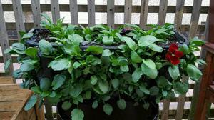 Planter hay basket