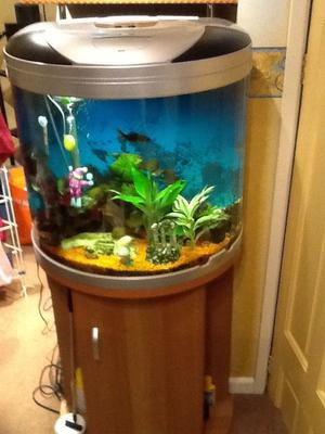 Aquarium and full set up in slough posot class for Aquarium set