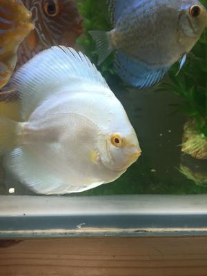 DISCUS FISH for sale Facebook Warwickshire discus sales