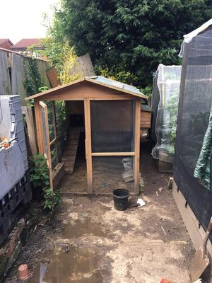 Chicken coop + 5 laying hens