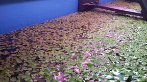 Aquarium plants posot class for Floating fish aquarium for pond