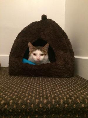 Male cat for good home