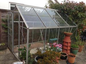 8' X 6' GREENHOUSE in VGC...