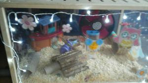 Living world hamster cage plus hamster