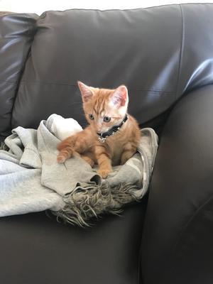 girl Adorable ginger kitten