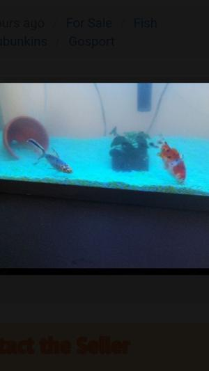 3 cold water fish *All 3 for £15