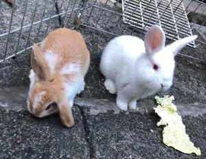 2 Beautiful Male Bunnies For Sale