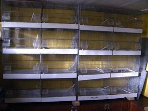 12 Italian Dolmus Moulinari Double Breeding cages