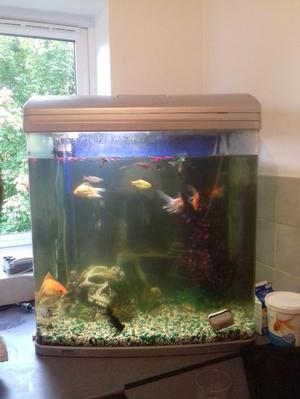 160 Ltr aquarium with all fish