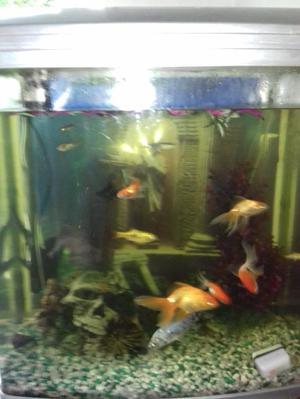 160Ltr aqua aquarium with fish