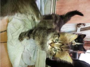 Kittens for sale in Derby