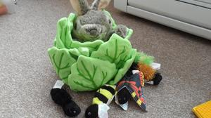 Rabbit in a Lettuce Puppet with Bugs