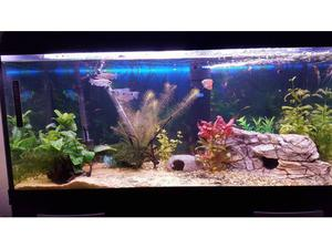 Tropical Fish free to a good home in Blackwood