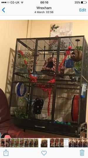 2 male Sugar gliders for sale with full set up and extras