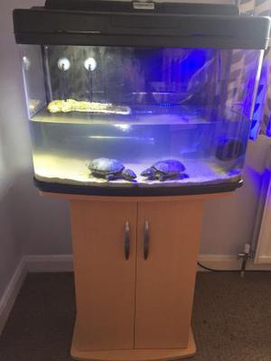 Musk turtles full set up