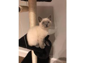 STOLEN kitten please help in Peterborough