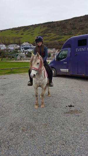 Riding School Ponies For Sale