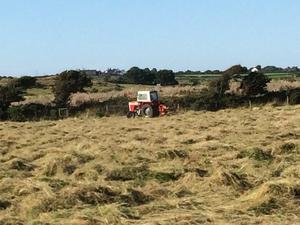 Small bale hay approx 100 surplus to requirement £4 each