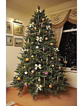 REMOVAL OF CHRISTMAS TREE AND DISPOSAL FOR £12 - MOST N/W AREAS COVERED