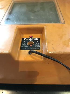 Brinsea Polyhatch Autoturn Incubator