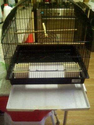 Budgie nesting boxes