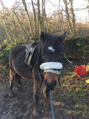 Dartmoor looking for a loving home