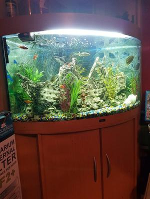 Hi I'm selling a tropical fish tank with external filter