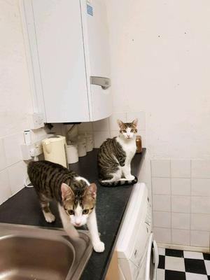 2 Kittens for good home