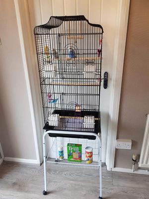 Two beautiful budgies with large 3ft cage with stand