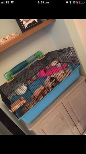 Gerbils with cage and accessories
