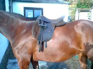 Thorowgood T4 COB Saddle 17in