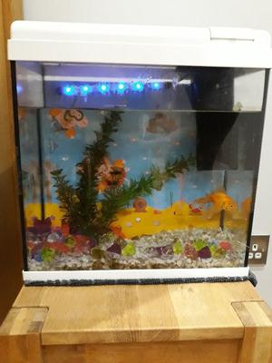 Goldi the Goldfish for sale