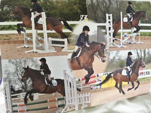 Fab 13.2 Irish hunting pony
