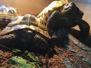 3 tortoise and vivarium