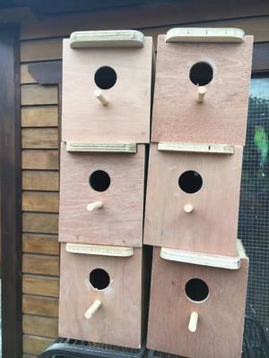 Budgies nest box for sale