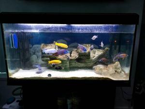 Malawi Fish tank 200l (aquarium) COMPLETE SET UP!