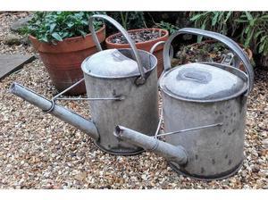 Various gardening items pots/plants/tools in Ilminster