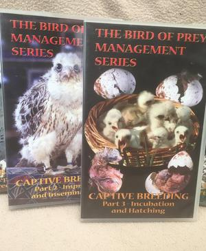 BIRD OF PREY MANAGEMENT SERIES