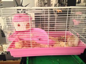 Female hamster