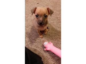 My gorgeous little bailey needs a loving new home! in